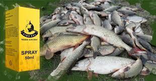 Fish XXL - fiskaktivator - apoteket - sverige - nyttigt